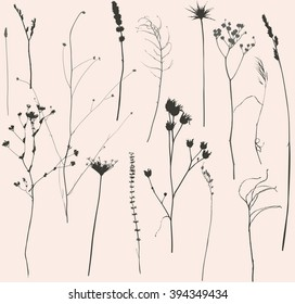 set of dried flowers and grass silhouette, isolated objects