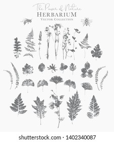 Set of dried herbs and natural plants and bees - herbarium logo collection on white background