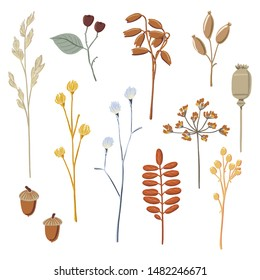 Set of dry autumn, fall branches, twigs and field flowers, flat style textured vector illustration isolated on white background. Set of hand drawn dry twigs, branches, berries, fall, autumn elements