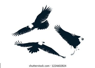 Set of Eagle Silhouette Vector Template
