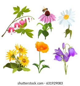 Set of echinacea, bleeding heart flowers, arnica, viola, chamomile and poppy
