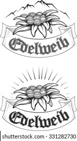 Set of edelweiss (leontopodium) flower, the symbol of alpinism, with banner and mountain. Vector tattoo illustration.  Logo.