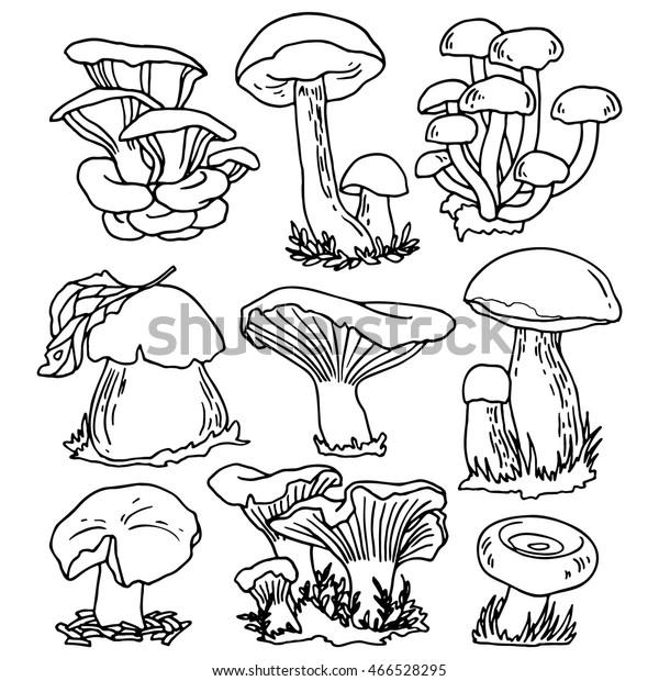 Set Edible Mushrooms Line Drawings Design Stock Vector
