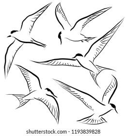 Set of editable vector sketches of generic terns in flight