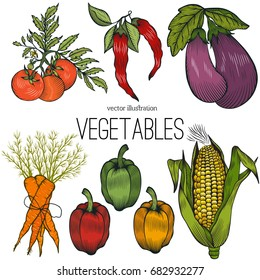 Set with eggplant, tomato, pepper,corn,carrot,chile pepper.Farm market product.Vector illustration.Great for menu; label; icon.Organic eco vegetable food
