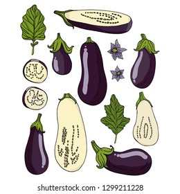 Set with eggplants on white background. Eggplants, eggplant slices, flowers and leaves isolated on white