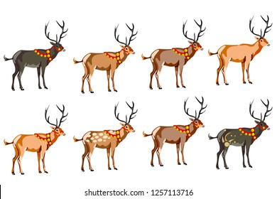 A set of eight deer of different colors. vector on white background