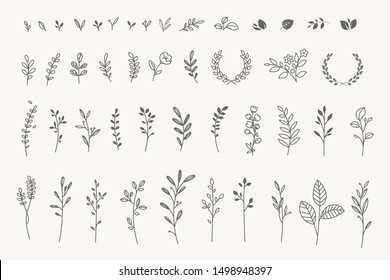 Set of elegant floral elements for graphic and web design. Vector illustrations for beauty, fashion, natural and organic products, spa and wellness, wedding and events, environment.