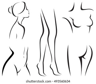 Set of elements of the body of women beauty vector illustration