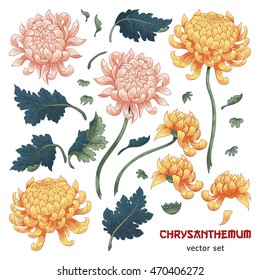 Set of elements of chrysanthemum flower to create designs. Japanese style.