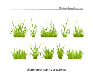 Set of elements for design - meadow green grass. A vector.