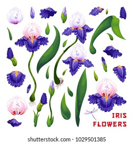 Set with elements of iris flowers to create designs.