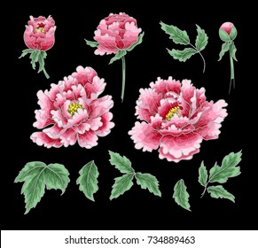 Set of elements of peony flower, leaves and grass on Chinese style. Vector illustration.