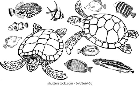 Set elements. Vector illustration of tropical fish and sea turtle on white background. Perfect for invitations, greeting cards, postcard, fashion print, banners, poster for textiles, fashion design.