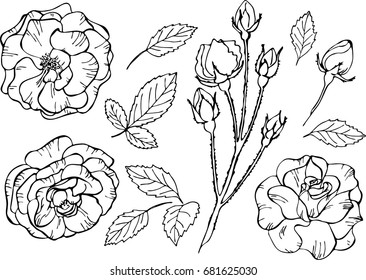 Set of elements. Vector illustrations of roses. Outline flowers are element for design. Template for greeting card, postcard, wedding card.