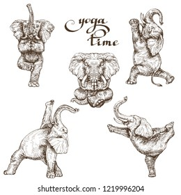 set of elephants doing yoga in various poses illustration in the style of engraving vector