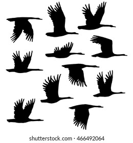 set of eleven editable vector silhouettes geese. Eleven different  beautiful swans flying. Isolated vector illustration. A wonderful collection of animals for designs