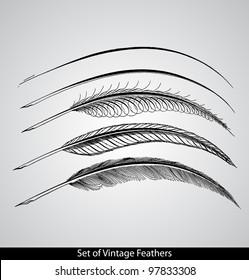 Set of engraved calligraphic vintage feathers. - Gems of Flourishing. - 1888