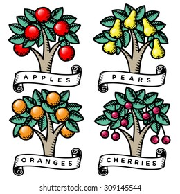 Set of engraved trees full of fruit. Vector.
