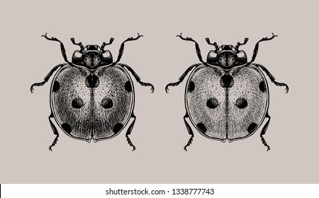 A set of engraving ladybugs. Isolated on gray background. Hand drawn illustration. Black ink. Great for tattoos, t-shirt printing, for Halloween and more.