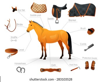 Set of equestrian equipment for horse. Saddle, bridle, Stirrup, Girth, Snaffle , Lead, Protection boots, Horseshoes, Blanket, Ear Net, Saddle pad, etc.