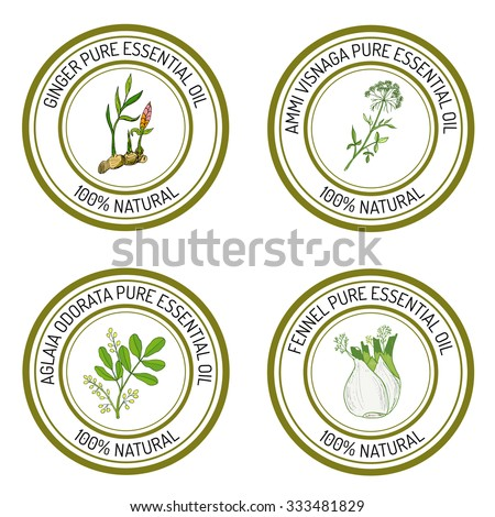 Set Essential Oil Labels Ginger Ammi Stock Vector (Royalty