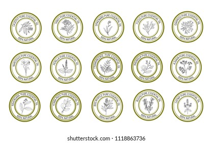 Set of essential oil labels. Hand drawn vector illustration