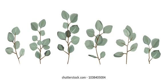 Set of eucalyptus branches isolated on white background. eps10