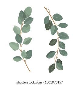 Set of eucalyptus branches isolated on white background.
