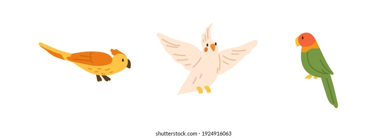 Set of exotic birds - yellow parrot with crest, flying cockatiel and bright colorful lovebird. Colored flat vector illustration of cute and pretty birdies isolated on white background