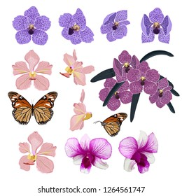 Set of Exotic Blooming and beautiful orchid flowers and botanical plants ,butterfly  hand drawn vector illustration stylish and colorful elements on white background color