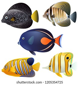 A set of exotic fish isolated on white background. Vector cartoon close-up illustration.