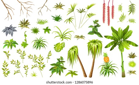 Set exotic plants jungle. Leafs palm and liana. Isolated vector illustration on white background.