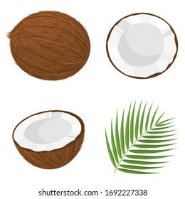 Set of exotic whole, half, cut slice coconut fruits and leaves isolated on white background. Summer fruits for healthy lifestyle. Organic fruit. Cartoon style. Vector illustration for any design.