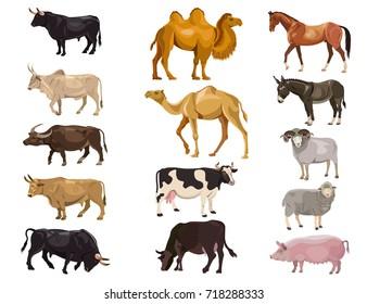 Set of farm animals - bulls, cows, camels, horse, donkey, sheep, pig. Vector illustration isolation on the white background