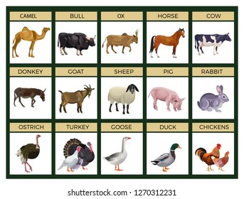Set of farm animals. Cattle, livestock, poultry. Vector illustration isolated on white background