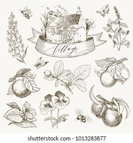 Set of farmhouse and garden flowers and fruits illustration. Hand drawn illustration. Vector design