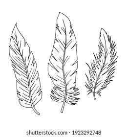 Set of feathers on a white background. Vector illustration for design of cards, invitations. Can be used in flyers, banners. Three feathers.