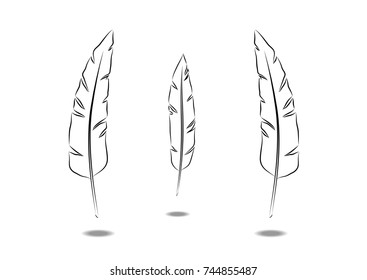 a set of feathers on a white background with a shadow
