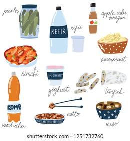 Set of fermented food, kimchi, kefir, yoghurt, miso, apple cider vinegar, kombucha, pickles, tempeh, sauerkraut. Hand drawn doodle style
