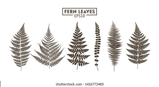Set of fern leaves isolated on white background. Vector EPS10