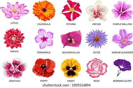 Set of fifteen types of flowers. Beautiful vector illustration of colorful bloom.