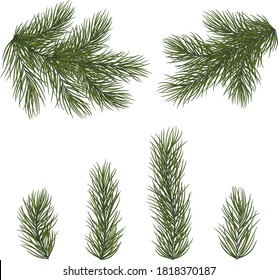 Set of fir branches for Christmas decor. Christmas tree branches close-up in a realistic style. EPS10