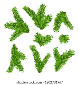 Set of fir branches. Christmas tree or pine branch vector evergreen illustration. Fir isolated holiday decoration