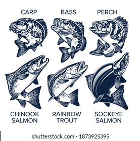 Set of Fish Emblems Vintage Style. Carp, Bass, Perch, Chinook Salmon, Rainbow Trout, Sockeye Salmon Vector Illustrations.