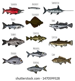 Set of fish. Vector cartoon illustrations. Seafood. Hand-drawn style. Isolated objects on a white background.