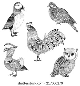 a set of five abstract hand drawn birds