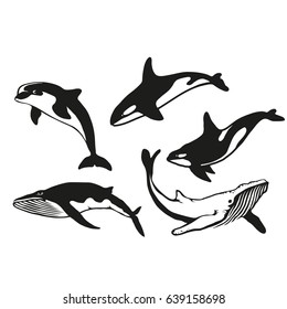 Set of five black  logo silhouettes of whales and dolphin, illustration isolated on white background, vector image of animals, Marine mammals from the order of cetaceans