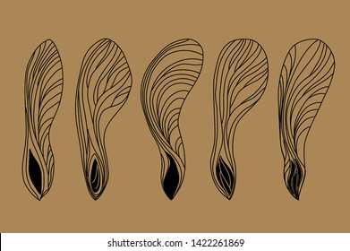 Set of five differently shaped maple seeds. Vector images of natural elements on brown background for eco design. Linear drawing of maple lionfish. Black on eco background