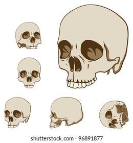 Set of Five Drawings of Human Skull. Vector Illustration